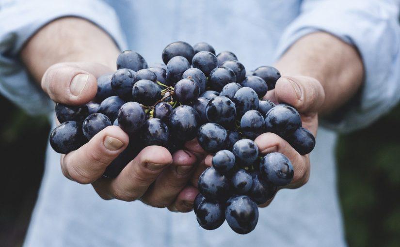 praca przy winoroślach